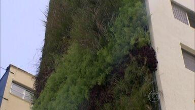 Laterais vazias de prédios podem ganhar jardins verticais - Prefeitura de SP vai começar projeto com os prédios ao lado do Minhocão, na região central. Tudo para deixar a cidade mais bonita, mas principalmente com mais áreas verdes.