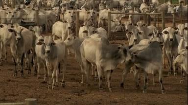 Começa a temporada mais forte de confinamento no Brasil - Com o dólar em alta e o mercado aquecido, os pecuaristas de GO e do norte de MG estão com dificuldade para comprar boi magro.