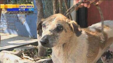 Alto índice de cachorros com leishmaniose preocupa moradores na Fronteira Oeste - Centenas de animais estão com a doença, que pode ser contraída por seres humanos.