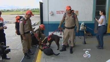 Bombeiros enviam cães farejadores à área onde helicóptero sumiu no AM - Cinco pessoas estavam na aeronave, entre elas havia duas indígenas.Helicóptero sumiu na sexta (29) e buscas somam mais de 30 horas, diz FAB.