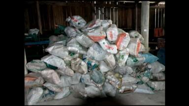 Embalagens de agrotóxicos são recolhidos em São José do Norte, RS - Ação recolheu 10 mil embalagens que serão destinadas para reciclagem.