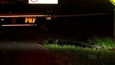 Idoso morre atropelado na entrada de Foz - O motorista disse aos policiais que não conseguiu evitar o acidente