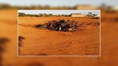 Moradores reclamam do descarte de lixo em locais impróprios, em Aparecida de Goiânia - Segundo telespectador, o terreno estava limpo, mas abandonado. A população começou, então, a jogar lixo, galhos e entulhos no local.
