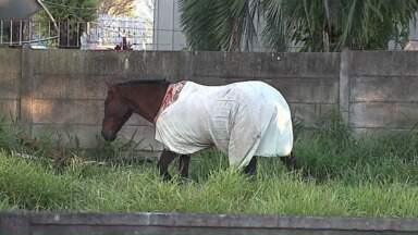 Cidades paranaenses registram dia mais frio dos últimos anos - Algumas imagens chamaram a atenção; em Ponta Grossa chegaram até a colocar roupa em um cavalo que estava solto na rua