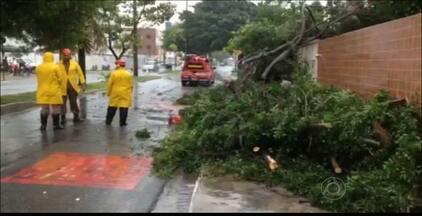 Chuva causa transtornos em João Pessoa - O trânsito ficou lento devido a vários pontos de alagamento e árvores tombadas.