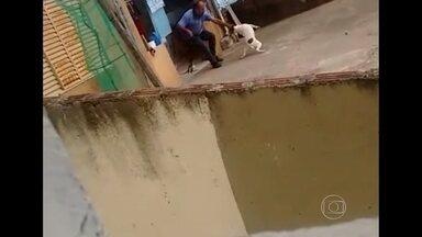 Homem suspeito de maltratar cães diz que 'ficou nervoso' e admite erro - Um vídeo mostra o motorista dando chicotadas nos cachorros que tem em casa, em Poços de Caldas, na Região Sul de Minas Gerais.