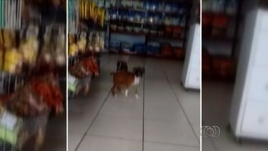 Polícia descarta possível maus-tratos a cachorro em pet shop de Goiânia - Imagens do animal circularam as redes sociais criticando estabelecimento.