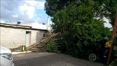 Ventos fortes derrubam várias árvores no Grande Recife - Diretora da Emlurb explica quais os cuidados que quem mora perto de árvores deve ter nessa época de ventos fortes.