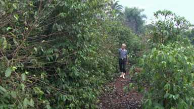 Geada que dizimou cafezais está completando 40 anos - Agricultor ainda se emociona quando lembra da Geada Negra.