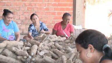 Conheça como é feita uma tradicional farinhada do interior do Piauí - Conheça como é feita uma tradicional farinhada do interior do Piauí
