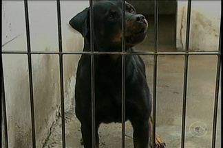 Há 18 anos cães farejadores auxiliam a Polícia de Petrolina - Eles ajudam a solucionar crimes como tráfico de drogas