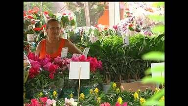 2º Festival das Flores de Holambra expõe 200 espécies em Santarém - Feira de plantas e flores ornamentais no Parque da Cidade vai até 26 de julho.