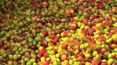 Máquina que promete descascar café sem usar água é desenvolvida em Machado (MG) - Máquina que promete descascar café sem usar água é desenvolvida em Machado (MG)