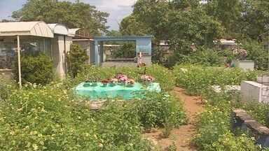 Cemitérios de Macapá estão cobertos de mato - Os cemitérios de Macapá estão cobertos de mato. A última limpeza foi para a visita do dia das mães. Quem tem parente enterrado nos cemitérios da capital cobra uma limpeza mais frequente do local.