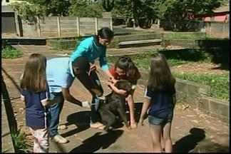 Começa em Araxá a 2ª etapa da campanha de vacinação antirrábica - Vacinas serão aplicadas no perímetro urbano. O trabalho não foi oferecido em 2014 e este ano as famílias estão atentas para imunizar os animais de estimação.