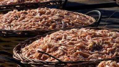 Produção de camarão é maior no Inverno - Produção de camarão é maior no Inverno.