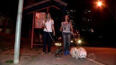 Conheça a rotina dos 'dog walkers' - Quem trabalha no ramo tem que passear com cães de estimação de outras pessoas; serviço está surgindo no Brasil e é comum no exterior.
