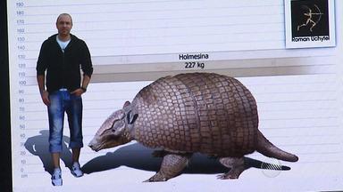 Fóssil de tatu gigante é encontrado na Chapada Diamantina - O fóssil, que tem dois metros e mais de 200 quilos, foi levado ao interior de São Paulo, onde será estudado.