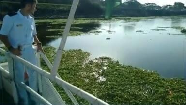 Algas atrapalham tráfego de barcos na barragem do rio Tietê - O repórter cinematográfico da TV TEM estava no barco que fazia a eclusagem na barragem do Tietê, mas as algas não permitiram que os barcos terminassem o passeio. Todo mundo teve que dar meia volta e o passeio precisou ser interrompido.