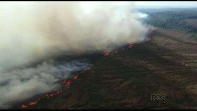 Incêndio em fazenda da Araupel será investigado - Empresa acredita que foi provocado por integrantes do MST