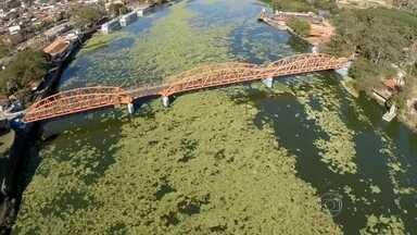 Poluição faz aumentar quantidade de aguapés no Rio Tietê (SP) - Em alguns trechos, não dá para ver a água do rio. O desiquilíbrio ambiental dificulta a navegação dos barcos.