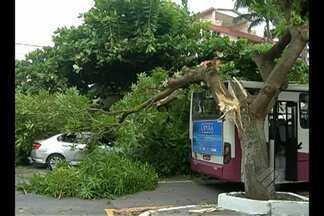 Em Belém, galho de árvore cai sobre ônibus e deixa cobradora ferida nesta quarta (19) - Carro que passava pela travessa 14 de Março também foi atingido. É a segunda árvore que cai apenas nesta semana.