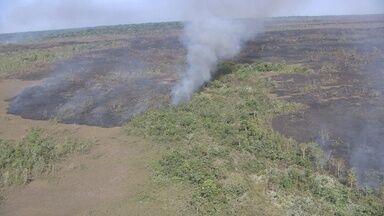 Raio pode ter causado incêndio em mais de 6 mil hectares entre RO e AM - Fogo foi extinto completamente na última terça-feira (18), diz Prevfogo.Levantamento dos prejuízos ainda está em andamento.