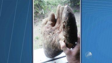 Inhame gigante parecido com uma mão é colhido na cidade de Laje (BA) - A raiz tem sete quilos. Normalmente, o inhame pesa entre 500 gramas e 1,5 kg.