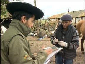 Cavalos passam por exames de detecção de mormo - Exigência é para poderem participar da cavalgada da chama crioula