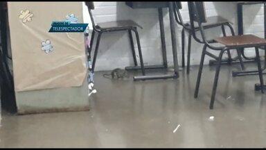 Imagens mostram ratos em salas de aula em escola de Taguatinga, no DF - Pais enviaram à produção do Bom Dia DF imagens dos ratos que circulam por salas de aula e pelo pátio de uma escola em Taguatinga, no Distrito Federal.