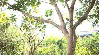 Como faz? Saiba como criar um sítio de árvores frutíferas - É importante que a comunidade cuide das árvores e ajude na iniciativa