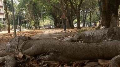Moradores reclamam de obstáculos em calçadas do DF - Muitos dos obstáculos encontrados por pedestres nas rua do Distrito Federal são provocados pelas raízes das árvores. Especialista explica o que pode ser feito para minimizar o problema. Confira.