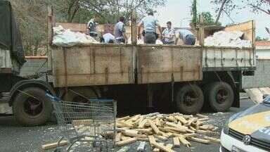 Delegado aguarda autorização para incinerar 2,4 toneladas de maconha - Droga que estava escondida em carga de farelo de mandioca foi encontrada na Rodovia que liga Águas da Prata a Minas Gerais.