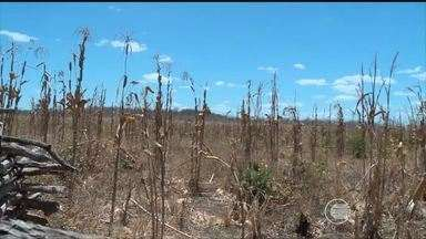 Agricultores sofrem com a seca e não receberam seguro safra - Agricultores sofrem com a seca e não receberam seguro safra