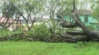 Os ventos chegam a 98km/h em União da Vitória - União foi uma das cidades atingidas. 70 pessoas foram prejudicadas pela chuva.