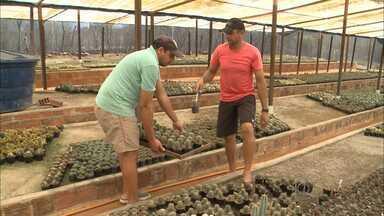 Quadro 'Paraíba Rural' fala sobre as técnicas de economia de água nas plantações - Produtores do sertão do Estado apostam em formas de cultivos mais econômicas e lucrativas.