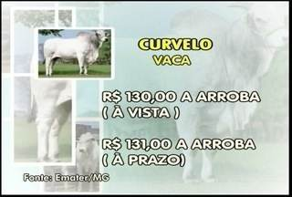 Veja como está as cotações do mercado do boi - Em Curvelo, a arroba da vaca custa R$ 130 à vista e R$ 131 a prazo.