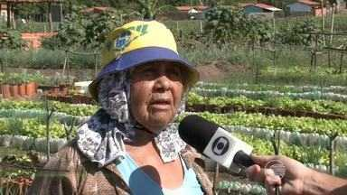 Governo do Piauí lança Plano Safra com recursos para pequenos e grandes agricultores - Governo do Piauí lança Plano Safra com recursos para pequenos e grandes agricultores