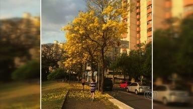 Temperatura no início da primavera pode chegar a 38ºC, em Goiânia - Sensação térmica nesta quarta pode chegar a 40ºC e umidade vai até 15%. Durante inverno, termômetros variaram entre 15ºC e 36ºC na capital.