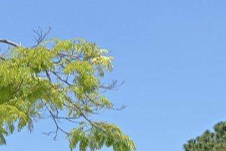 Primavera começou na manhã desta terça-feira (23) - O inverno foi mais quente e mais frio que o normal.