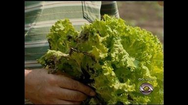 Chuva prejudicou a produção de hortaliças - Agricultores da região estão tendo prejuízos.