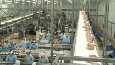 Paraná lidera exportações de frango no Brasil - Alta do dólar impulsiona o setor e avicultores investem em tecnologia