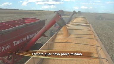 Federação pede reajuste no preço mínimo da saca do milho - Federação pede reajuste no preço mínimo da saca do milho