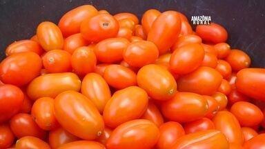 Veja como é feita a produção de tomate gourmet na Amazônia - Mini tomate italiano é uma novidade para boa parte da população do Norte.