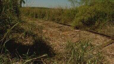 Moradores de Bebedouro, SP, denunciam crime contra antiga ferrovia - Trilhos têm sido furtados com frequência entre Araraquara e Colômbia.