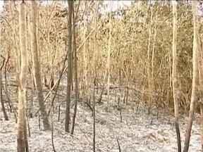 Incêndio em reserva no Vale do Mucuri é controlado - Cerca de 200 hectares de vegetação foram destruídos.