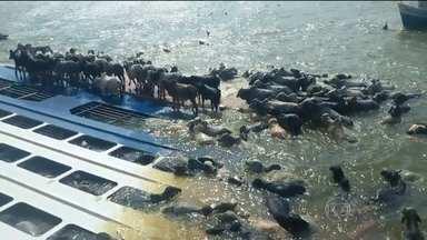 Navio afunda com cinco mil bois em rio do Pará - Embarcação tombou em uma das plataformas do Porto de Vila de Conde, no nordeste do estado. Ninguém ficou ferido.
