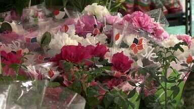 Festival cheio de cores e perfume é realizado em Aracaju - Até a próxima quinta-feira, todos os caminhos dos apaixonados por flores levam à Praça Fausto Cardoso, no Centro da capital. É que lá está acontecendo um festival cheio de cores e perfumes.