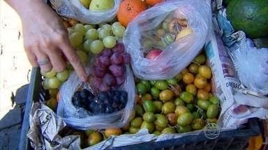 Piquenique é opção barata e saudável para o Dia das Crianças - Nutricionista ensina que tipo de alimento deve ser levado.
