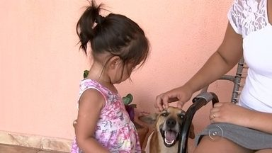 Cachorro vira herói após salvar criança de ataque de pit bull - Um cachorro vira-lata salvou a vida da pequena Emanueli da Cunha, de um ano e seis meses, do ataque de um cão da raça pit bull em São José do Rio Preto (SP). Segundo a família, a criança brincava na calçada de casa com os avós, na região norte da cidade, quando foi atacada pelo cão.